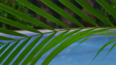 Woman at spa laying by pool gets head massage, Costa Rica - stock footage