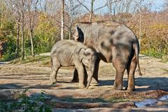 Mother and child elephants Stock Photos