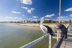 People fishing at Henley beach jetty, Adelaide, South Australia Stock Photos