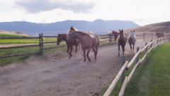 Slow Motion - Horses Trotting 07 Stock Footage