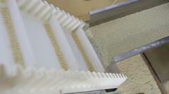 Pasta production line - stock footage