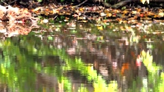Fall leaves floating on water Stock Footage