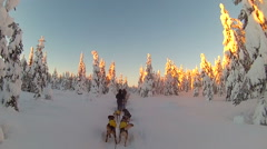 POV sled dogs ride at sunset Stock Footage