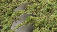 Grapes Pushed Along by an Auger Stock Footage