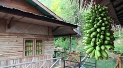 Bunch of small green bananas and bungalow on the river Stock Footage