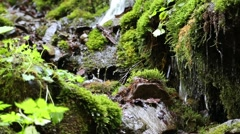 Water from beautiful stream in the forest Stock Footage