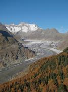 Colorful larch forest and Aletschgletscher - stock photo