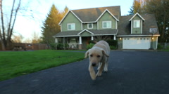 Puppy running up driveway Stock Footage