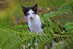 Young domestic cat - stock photo