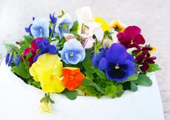 White Pot with Viola Pansy Flowers - stock photo