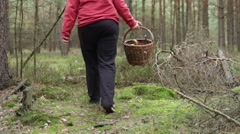 Woman walking and mushroom picking in forest Stock Footage