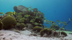 Reef scene in the shallows Stock Footage