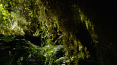 View of tree covered with moss in Hoh Rainforest Stock Footage
