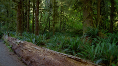 View of tree trunk in Hoh Rainforest Stock Footage