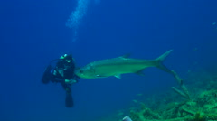 Diver with huge tarpon Stock Footage