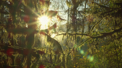 View of trees in Hoh Rainforest Stock Footage