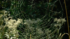 Close-up of spider web with dew drops Stock Footage