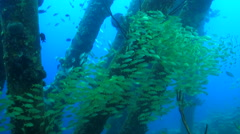 schooling fish under the pier - stock footage