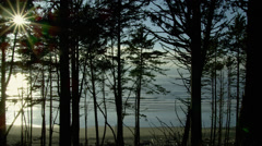 View of trees at Ruby beach Stock Footage