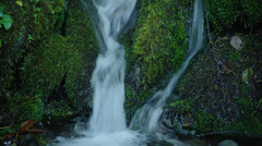 View of waterfall in Hoh Rainforest Stock Footage
