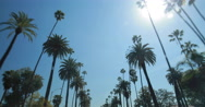Stock Video Footage of Palm trees driving POV shot
