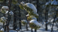 Snow in the winter forest Stock Footage