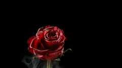 Red rose frozen in liquid nitrogen explodes in slow motion. Shot at 1000 frames Stock Footage