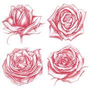 Roses Drawing set - stock illustration