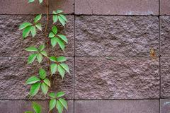 Background of decorate sand stone wall surface Stock Photos