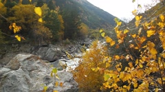 Beautiful autumn landscape with golden trees, mountain and river - stock footage