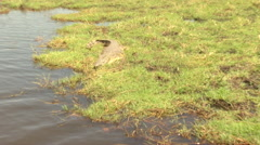 Crocodile Sun Bath Stock Footage