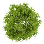 top view of maidenhair tree isolated on white background - stock illustration