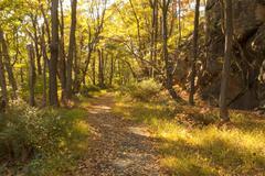 Fall Scenery. - stock photo