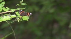 Butterfly flying off a branch - stock footage
