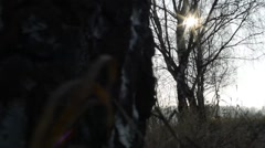 Bare forest and sunbeams - sunny Stock Footage