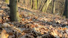 Bare forest - sunny - slider move - leaves - closeup Stock Footage