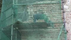Worker repair old  brick wall and scaffolding Stock Footage