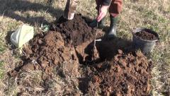 Planting young apple tree in spring Stock Footage