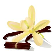 Vanilla flower with sticks. - stock illustration
