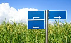 Blue traffic sign with green paddy rice background Stock Photos