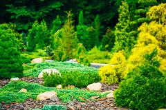 Garden Landscaping Design. Flower Bed, Green Trees And Bushes In - stock photo