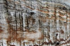 Wood Stock Photos