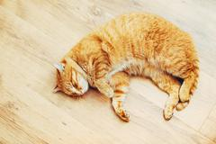Peaceful Orange Red Tabby Cat Male Kitten Sleeping In His Bed On Stock Photos