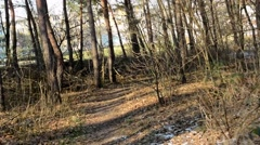 Flying through bare forest - sunny - building in background Stock Footage