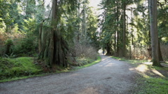 Stanley Park Forest Path, Vancouver Stock Footage