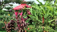 Honduras Roatan Island Mahogany Bay 012 red pavilion between much exotic plants Stock Footage