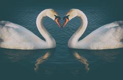 Vintage phoyo of romantic two swans, symbol of love Stock Photos