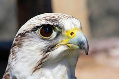 bird of prey - stock photo