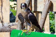 Bird of prey Stock Photos