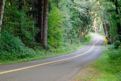 Two Lane Road Cuts Through Dense Tree Canopy Hoh Rainforest Stock Photos